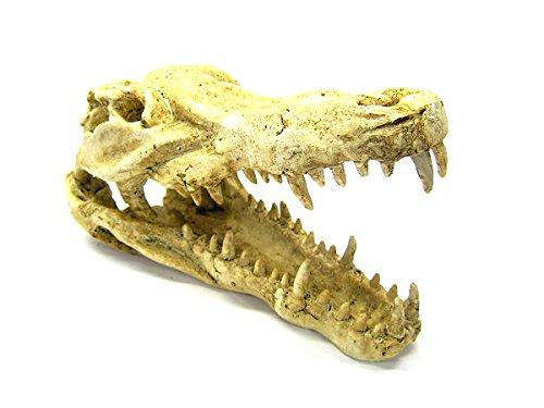 (Crocodile Skull 9.2