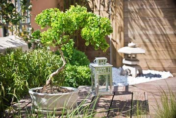 adrium bonsaï Dans un Coin de Jardin Zen (53514435), Póster, 30 x 20 cm: Amazon.es: Jardín