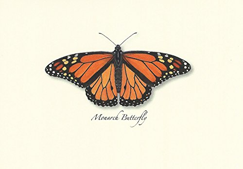 Monarch Butterfly Boxed Note Cards-- Set of 8 (Monarch Card Stationery)