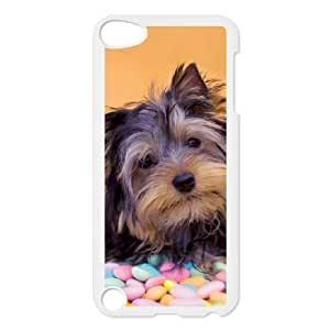 iPod Touch 5 Case White Yorky Puppy With Candy M4B6YL