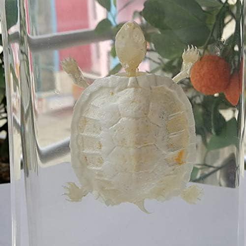 FHUILI Tortoise Skeleton Specimen Animal Skeleton Model Tortoise Skeleton Natural Bone Model Science Education Resin Animal Specimen for Animal Anatomy Teaching Instrument