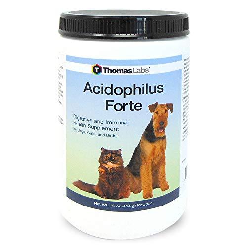 Thomas Labs Acidophilus Forte Digestive Powder, 16-Ounce by Thomas Lab