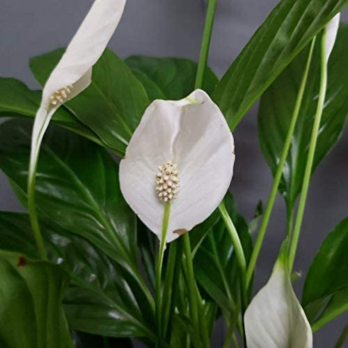 Air Purifying And Toxin Removing Indoor Plants