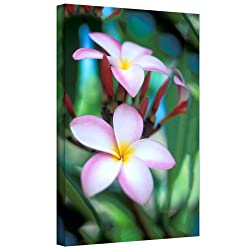 """Art Wall """"Maui Plumeria"""" Gallery Wrapped Canvas Art By Kathy Yates, 32 By 48-inch"""