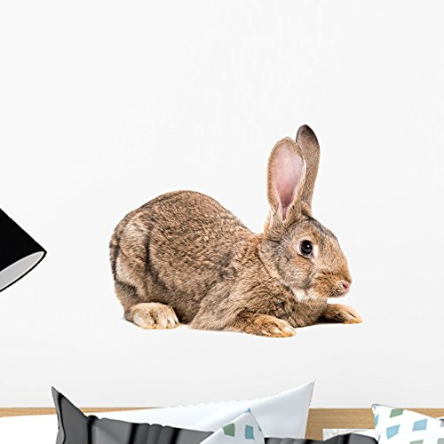 Wallmonkeys Portrait Brown Rabbit Wall Decal Peel and Stick Graphic (18 in W x 12 in H) WM362373