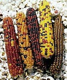 cutie-pops-popcorn-100-seeds-multicolored-miniature