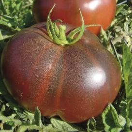 David's Garden Seeds Tomato Beefsteak Black Krim D2063 (Black) 50 Organic Heirloom Seeds