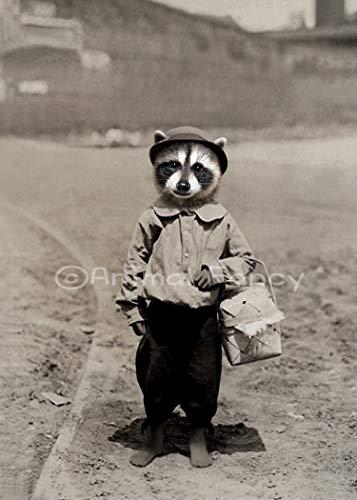 Raccoon Art Print -