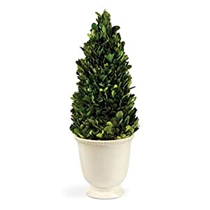 "CC Home Furnishings 15"" Preserved Boxwood Evergreen Cone Topiary in Beaded White Planter - Unlit 49"