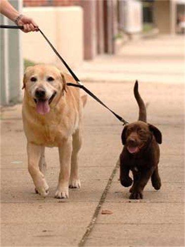 Sporn Double Dog Coupler, Black, My Pet Supplies