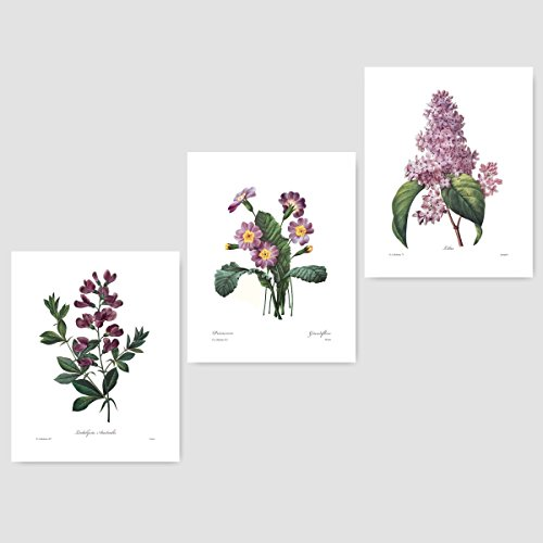 Giclee Fine Antique White Art ((Set of 3) Botanical Wall Prints (Purple Home Decor, Redoute Room Flower Art) Sweet Pea Lilac Primrose - 8x10 Unframed)