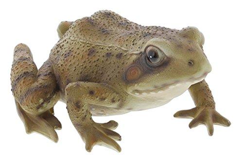 Joy Frog (Border Concepts Nature's Gallery Pet Pals (Frog))