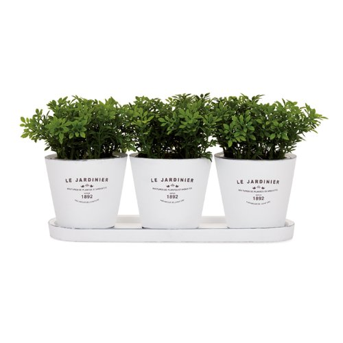 Jardiniere Collection - Torre & Tagus 900784 Jardinier Round Planters on Tray, White