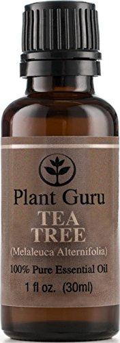 Tea Tree (чайное дерево) Эфирное масло. 30 мл. (1 унция). 100% Pure, неразбавленном виде, терапевтической степени чистоты.