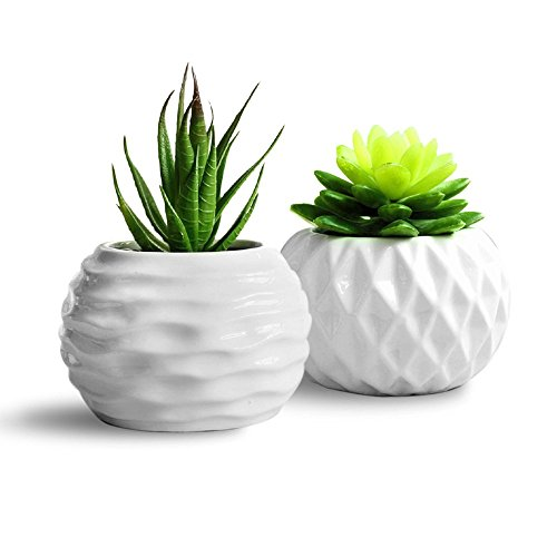 GeLive Succulent Decorative Container Containers