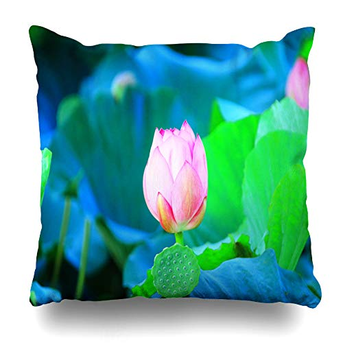 Ahawoso Throw Pillow Covers Pond Blue Yeonhwa Nail Which Jeju Nature Blossom Color Famous Place Design Home Decor Zippered Pillowcase Square Size 20 x 20 Inches Cushion Case