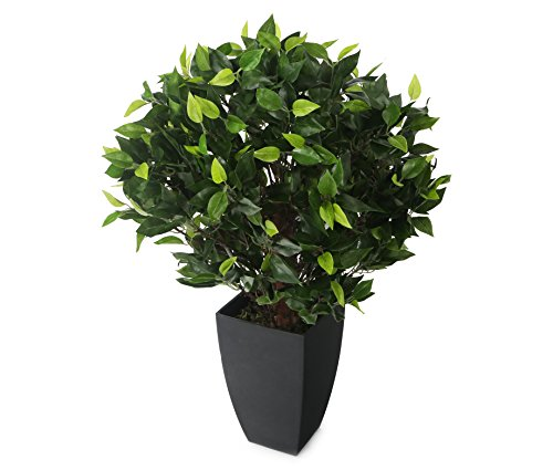 Closer to Nature Artificial 2ft Danielle Weeping Fig Tree - Artificial Silk Plant and Tree - Trees Silk Fig