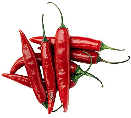 - 30+ Thai Red Super Hot Pepper Seeds ORGANICALLY Grown Heirloom Non-GMO Super Fragrant Capsicum annuum, Chili, Spicy, Rich Flavor, Productive, Grown in The USA!