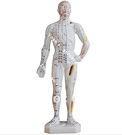26cm pequeña modelo de puntos de acupuntura modelo del modelo masculino cuerpo humano modelo meridiano, la medicina china: Amazon.es: Oficina y papelería