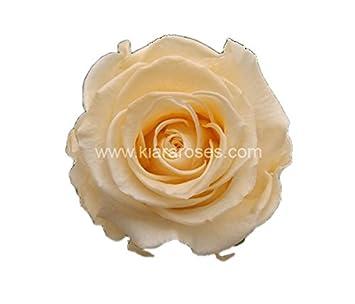 6 Einzelne Rosen Im Karton Natürlich Gewachsen Getrocknet