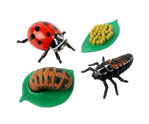 Insect Lore Live Baby Ladybug Larvae - Ladybug Growing Kit REFILL with Ladybug Life Cycle Toy Figurines - SHIP NOW by Insect Lore (Image #4)