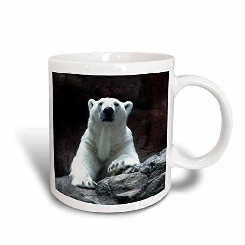 3dRose Polar Bear Resting Ceramic Mug, ()