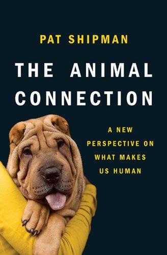 The Animal Connection: A New Perspective on What Makes Us Human cover