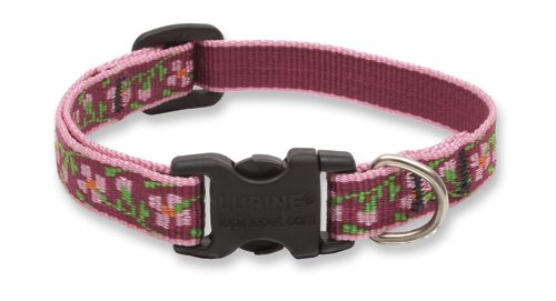 LupinePet 1/2-Inch Cherry Blossom 6-9-Inch Adjustable Dog Collar for Small Dogs (Lupine Cherry Blossom)