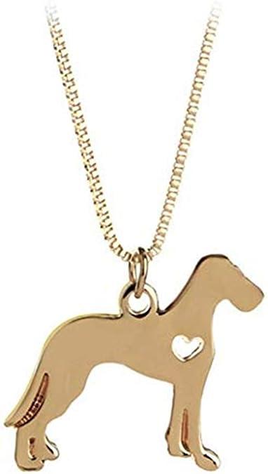 collier pour chien labrador