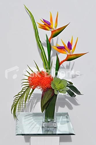 Amazon Com Silk Blooms Ltd Tropical Artificial Bird Of Paradise And Succulent Floral Table Arrangement Home Kitchen