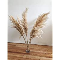 Pampas Grass 3 stems Natural Extra Fluffy Large 46'' - Home Decor, Wedding Boho Plant