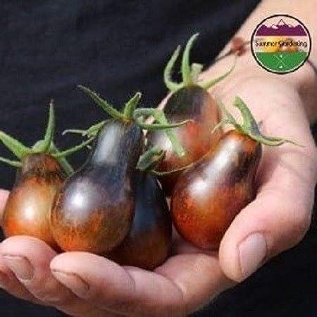 Pear Tomato Heirloom Vegetable Seeds! Blue Keyes Tomato 5+ Seeds