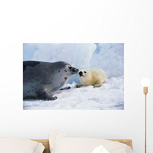 Mother Harp Seal - Wallmonkeys Harp Seal Mother and Pup Wall Decal Peel and Stick Graphic WM8355 (24 in W x 16 in H)