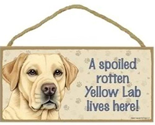 A Spoiled Rotten Yellow Lab Lives Here - 5