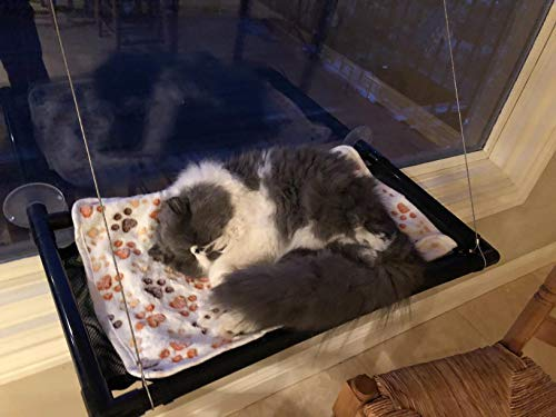 Enjoyable Cat Bed Window Perch Hammock Sunny Seat For Larger Cats Perches Window Mounted Cat Beds Two Kitty Window Seat Animal Pet Kitten Cot Beds Heavy Duty 4 Dailytribune Chair Design For Home Dailytribuneorg