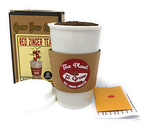 3b9d62c40bfe21 GFF Grass Flip Flops Grow Your Own Red Zinger Tea