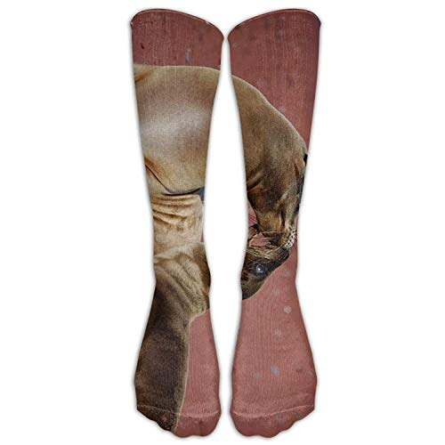 Polar Bear Kiss Casual Socks Calf High Long Breathable Sock Unisex