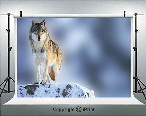 Wolf Photography Backdrops Carnivore Animal in Snow Mountains Blurred Background Alpine Canine Nature Photograph Decorative,Birthday Party Background Customized Microfiber Photo Studio ()