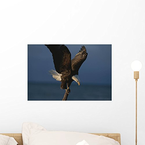 Northern American Bald Eagle Wall Mural by Wallmonkeys Peel and Stick Graphic (18 in W x 12 in H) WM142040