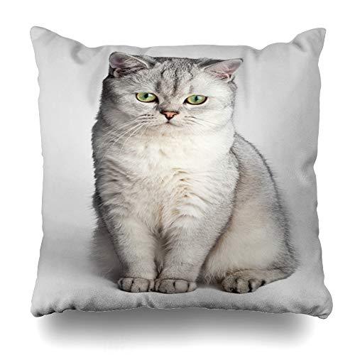- Ahawoso Throw Pillow Cover Square 16x16 Hair Orange Sitting Domestic Cat Gray Head British Shorthair Adorable Cute Design Pet Zippered Cushion Case Home Decor Pillowcase