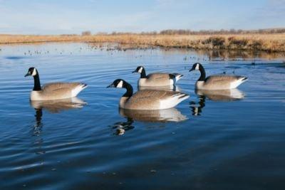 Big Foot Canada Goose Floater Decoy - 113481 ()