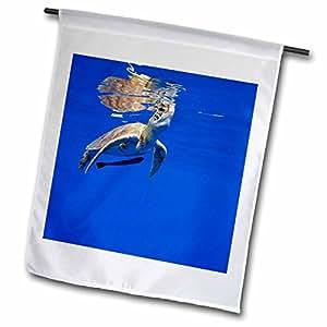 Danita Delimont - Turtles - Hawaii, Big Island, Green Sea Turtle - US12 PSO0047 - Paul Souders - 18 x 27 inch Garden Flag (fl_89852_2)