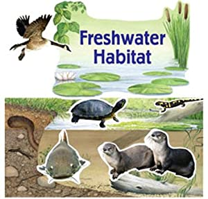 Amazon.com: Freshwater Habitat Bulletin Board Set: Toys