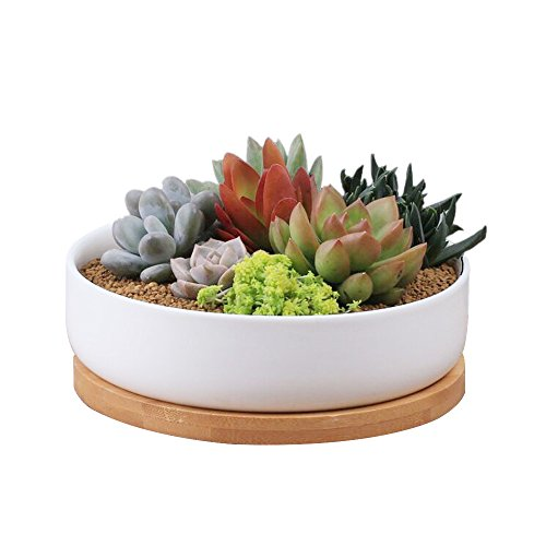 6 Inch Modern White Ceramic Round Succulent Cactus Planter Pot with Drainage Bamboo Tray,Decorative Garden Flower Holder Bowl