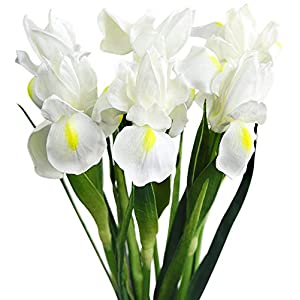 MARJON FlowersLong Stems (Cream White) Real Touch Artificial Iris Flowers for Home Shop Office Restaurant Wedding Decoration Party DIY Flower Arrangement 22
