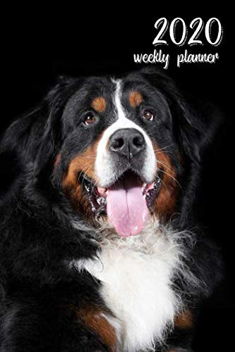 2020-Weekly-Planner-6-x-9-in-Bernese-Mountain-Dog-52-Weekly-Calendar-Schedule-Organizer-Appointment-Journal-Notebook-for-dog-fans