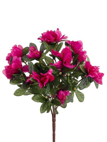 13-Azalea-Bush-x7-Fuchsia-Pack-of-36