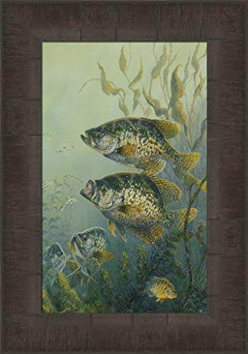 (Black Crappies by Terry Doughty 11x15 Pan Fish Fishing Lake Framed Art Print Wall Décor Picture )