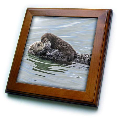 3dRose Danita Delimont - Otters - USA, California, San Luis Obispo County. Sea Otter Mother and pup. - 8x8 Framed Tile (ft_314655_1) ()