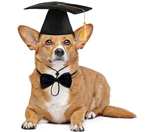 Dog Graduation Cap and